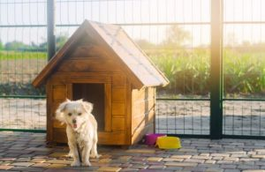 Casetas para Perros